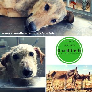 Insatgram SUDFEH #fundanimalprotection