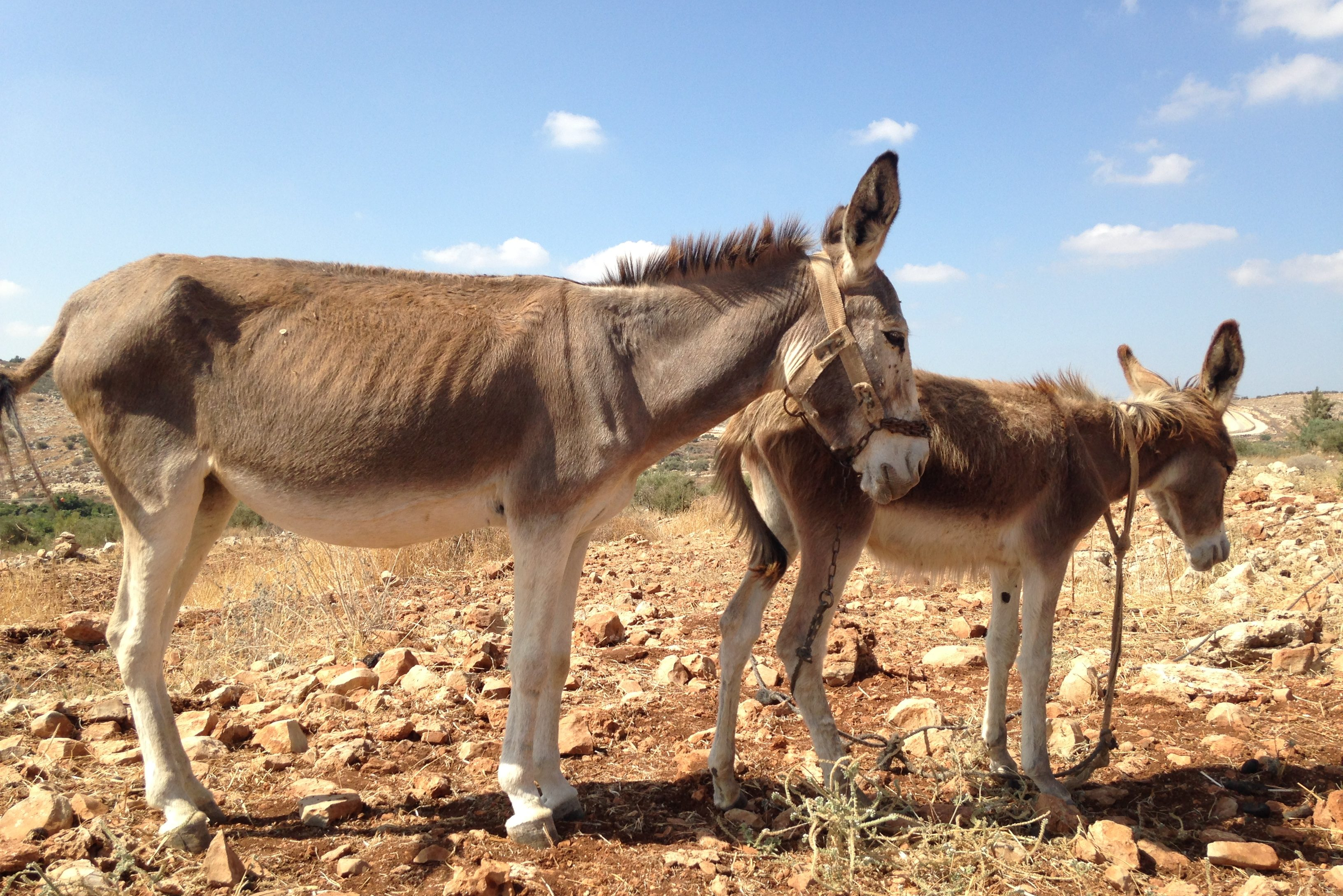 Horse and Donkey Welfare